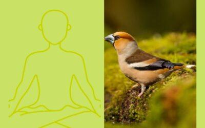 De overeenkomst tussen de nationale tuinvogeltelling en mediteren